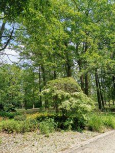 Séminaire nature au Parc Floral de Paris